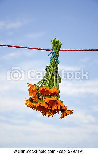 ハーブ, 花, ひも, 束, calendula, 医学, 掛かること - csp15797191