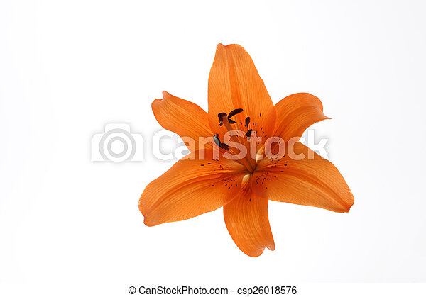バックグラウンド。, 白い花 - csp26018576