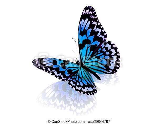 バックグラウンド。, 白, 隔離された, butterfly. - csp29844787