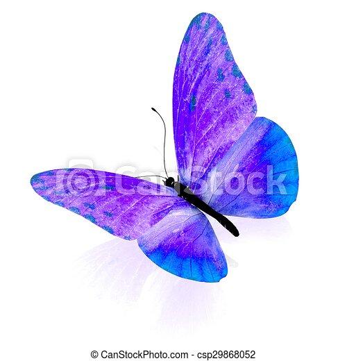 バックグラウンド。, 白, 隔離された, butterfly. - csp29868052