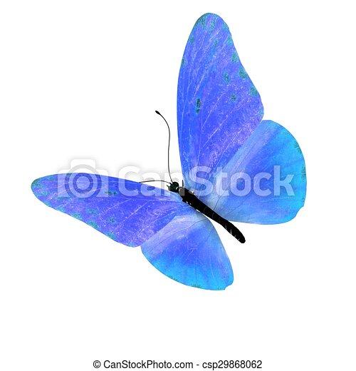 バックグラウンド。, 白, 隔離された, butterfly. - csp29868062