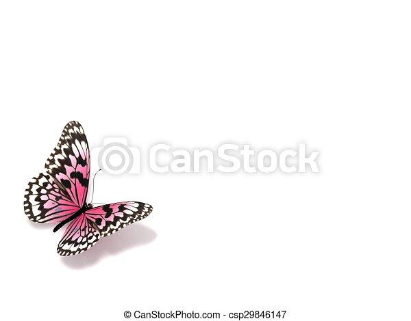 バックグラウンド。, 白, 隔離された, butterfly. - csp29846147