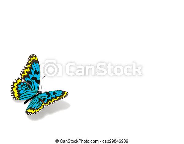 バックグラウンド。, 白, 隔離された, butterfly. - csp29846909