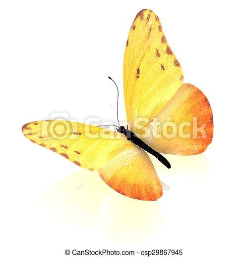 バックグラウンド。, 白, 隔離された, butterfly. - csp29867945