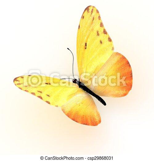 バックグラウンド。, 白, 隔離された, butterfly. - csp29868031