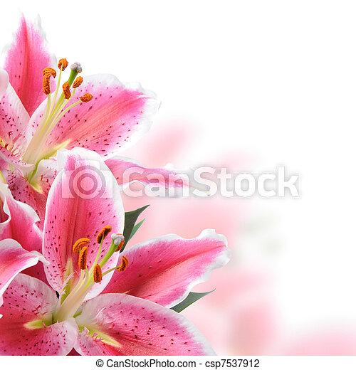 ピンク, ユリ - csp7537912