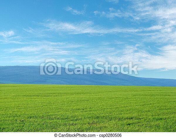 フィールド, 小麦 - csp0280506