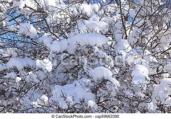 ブランチ, 雪 - csp59663390