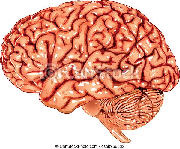人間の頭脳, 横の視野 - csp8956582