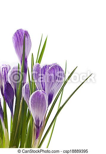 春の花, 背景 - csp18889395
