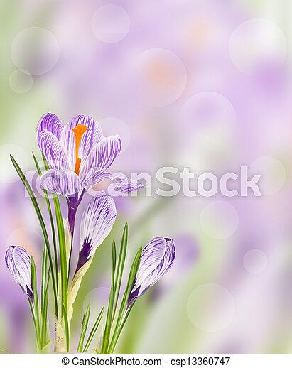 春の花, 背景 - csp13360747