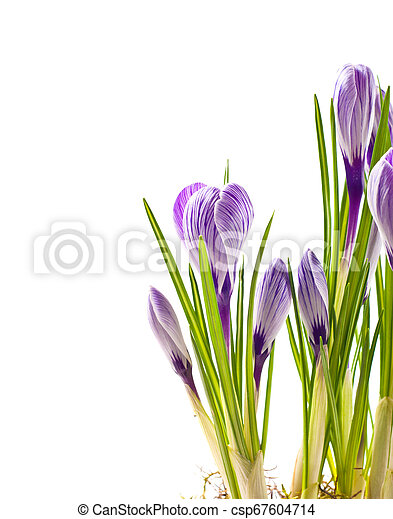 春の花, 背景 - csp67604714