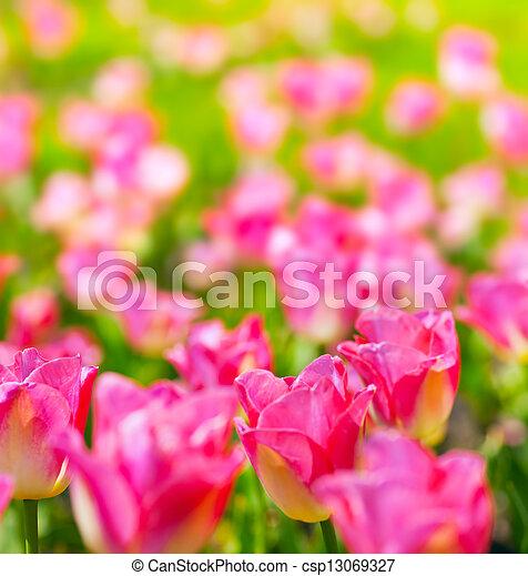 春の花, 芸術, 背景 - csp13069327