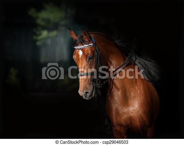 暗い, 馬, スポーツ, dressage, manege - csp29046503