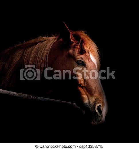 暗い, 馬 - csp13353715