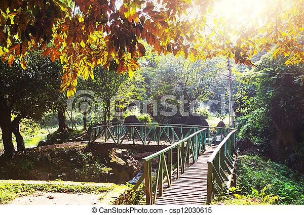 木製の橋 - csp12030615