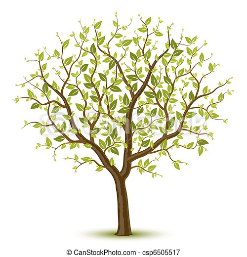 木, leafage, 緑 - csp6505517