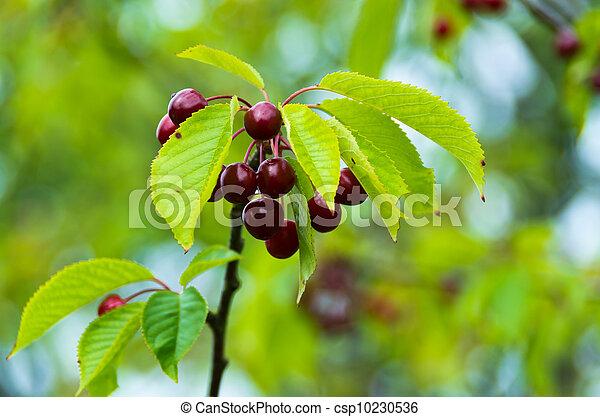 桜の木 - csp10230536