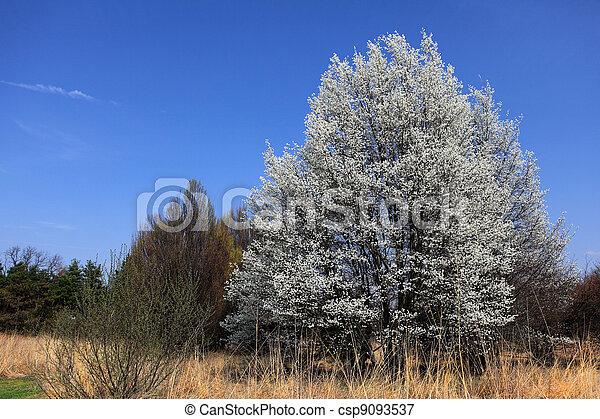 桜の木 - csp9093537