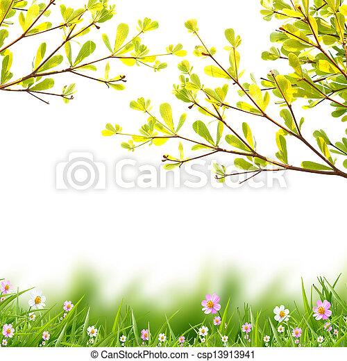 白い花, 背景 - csp13913941