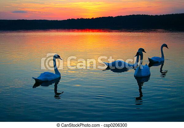 白鳥, 家族 - csp0206300