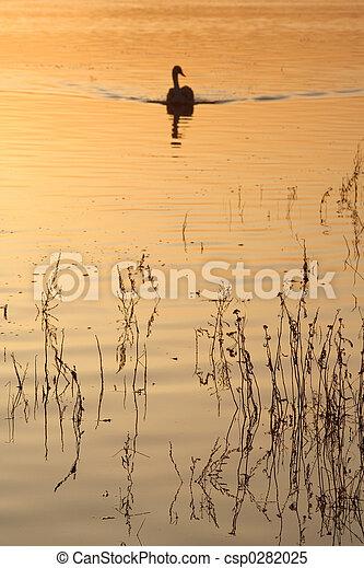 白鳥, 日没 - csp0282025