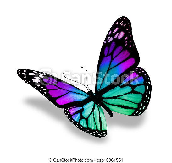 白, 蝶, 背景, 隔離された - csp13961551