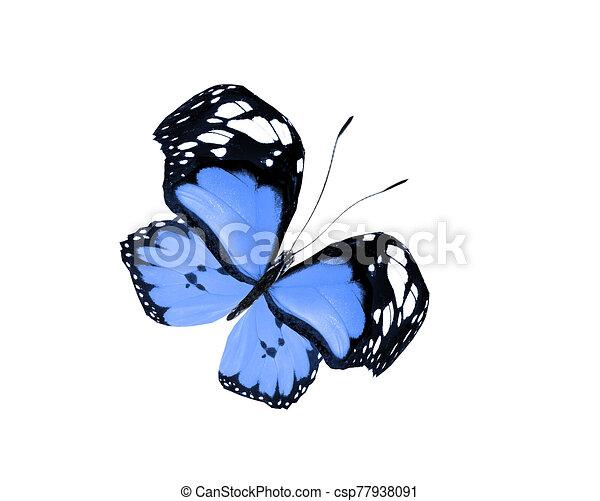 白, 隔離された, 蝶色, 背景 - csp77938091