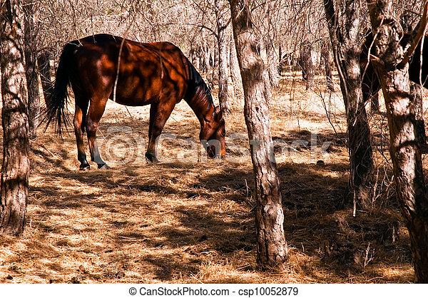 秋, 暗い, 馬 - csp10052879