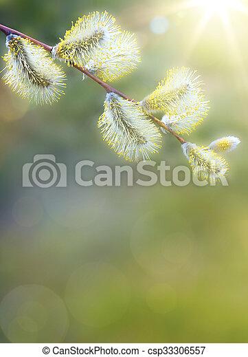 芸術, 春の花, 背景 - csp33306557