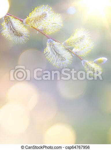 芸術, 春の花, 背景 - csp64767956
