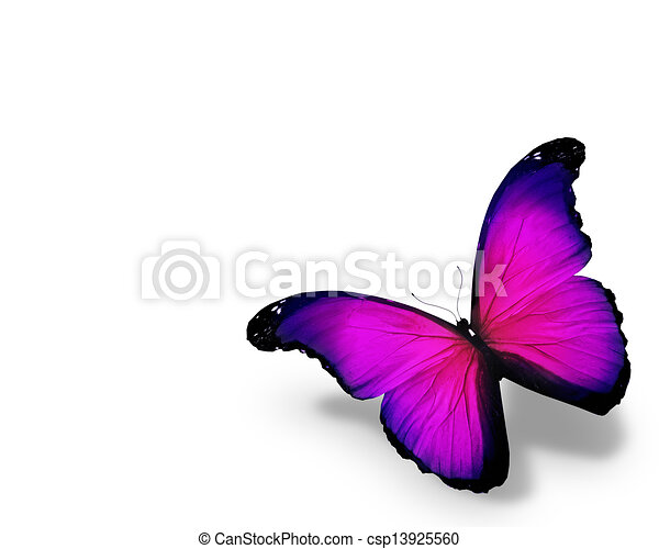 蝶, 白, 隔離された, 背景, すみれ - csp13925560