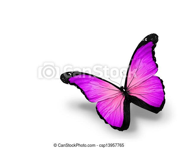 蝶, 白, 隔離された, 背景, すみれ - csp13957765