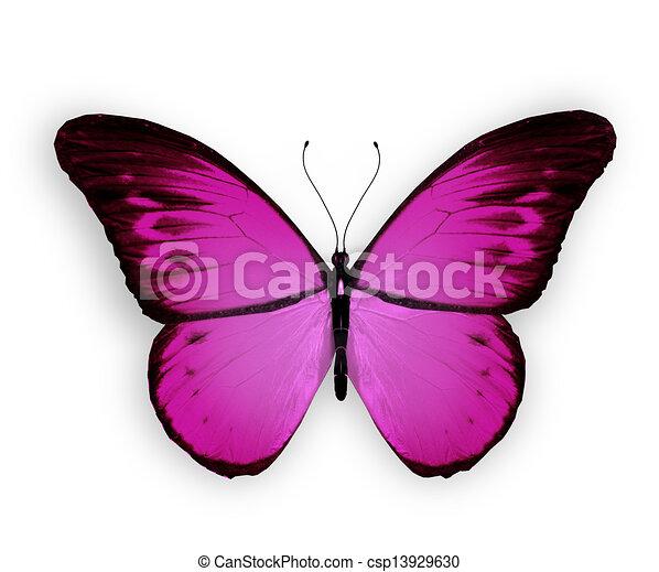 蝶, 白, 隔離された, 背景, すみれ - csp13929630