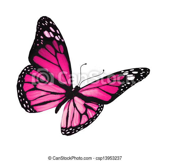 蝶, 白, 隔離された, 背景, すみれ - csp13953237