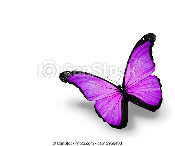 蝶, 白, 隔離された, 背景, すみれ - csp13956403