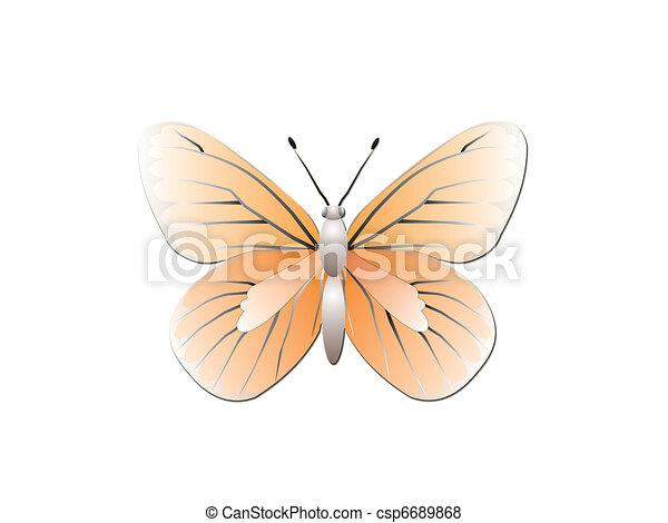蝶, 白, 隔離された, 背景 - csp6689868