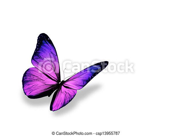 蝶, 隔離された, 背景, すみれ, 白 - csp13955787