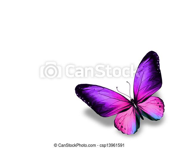 蝶, 隔離された, 背景, すみれ, 白 - csp13961591