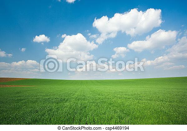青い空, 小麦, 緑のフィールド - csp4469194