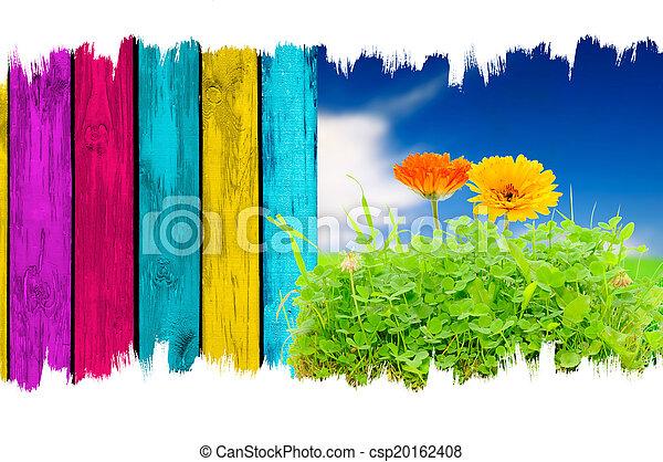 青い花, フェンス, 木製である, 上に, 空, 多彩, 背景, calendula, 草 - csp20162408