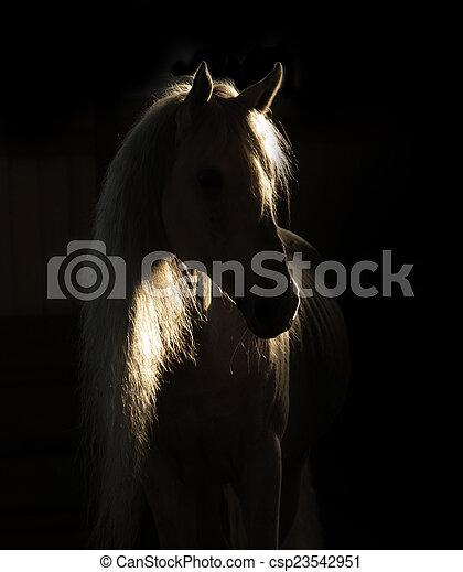 馬, 影 - csp23542951